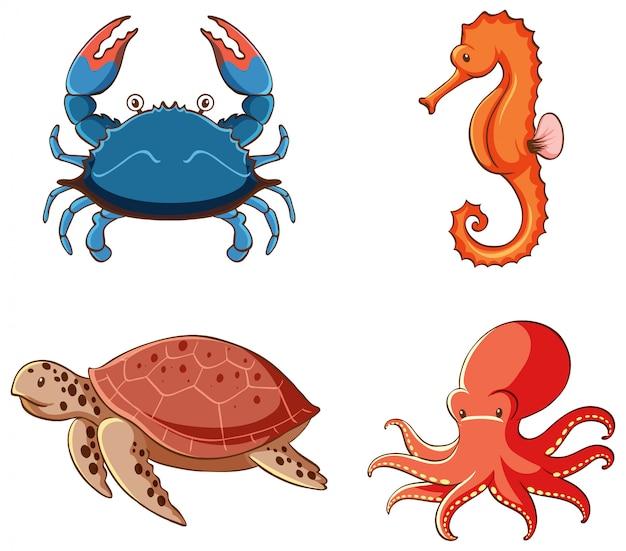 Image Isolée D'animaux Marins Vecteur gratuit
