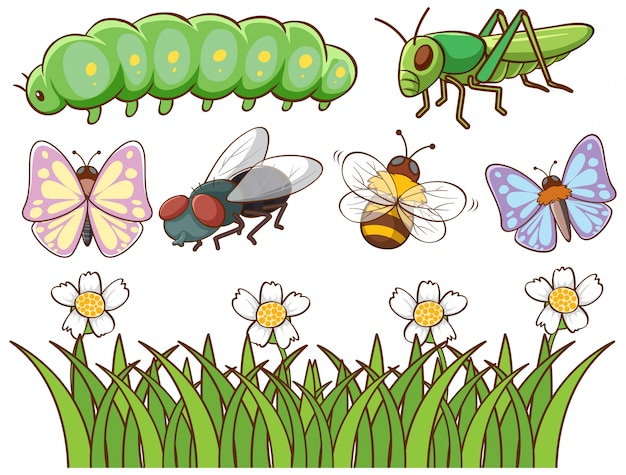 Image Isolée De Différents Insectes Vecteur gratuit