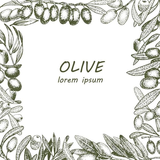 Image de vecteur de branche d'olivier. gravure de style dessiné à la main. illustrations vintage vectorielles Vecteur Premium