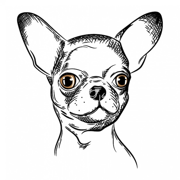 Image vectorielle d'un chien chihuahua Vecteur Premium