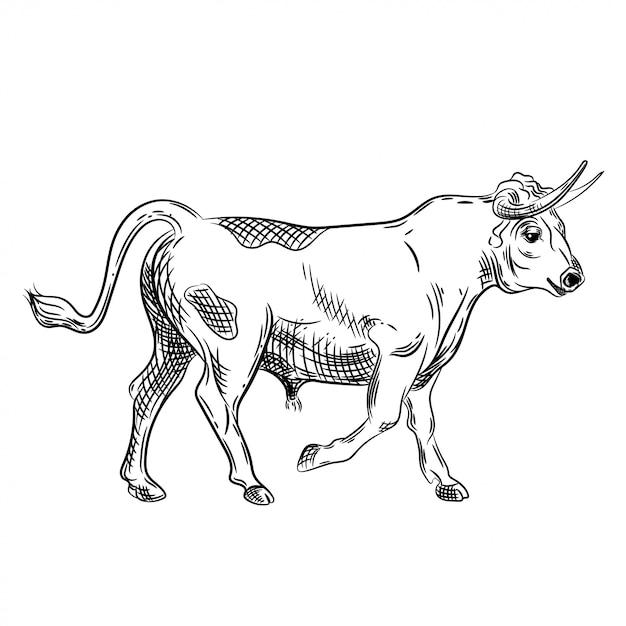 Image vectorielle d'un taureau Vecteur Premium
