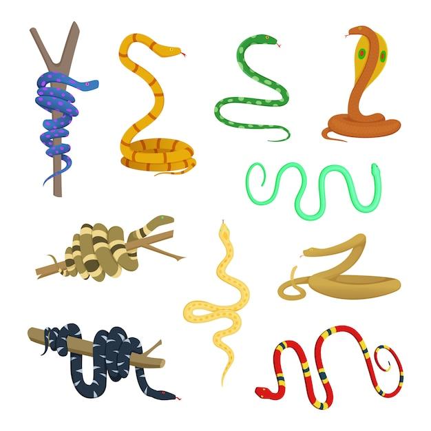 Images de dessins animés de différents serpents et reptiles Vecteur Premium