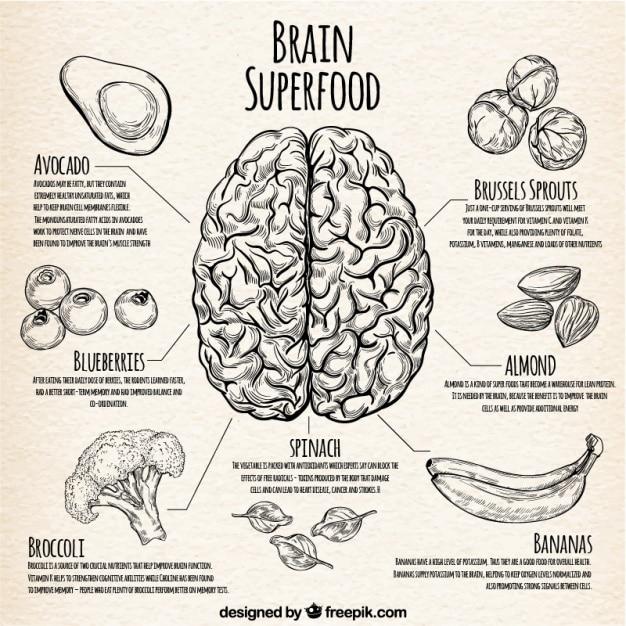 Infographic avec la meilleure nourriture pour le cerveau Vecteur gratuit