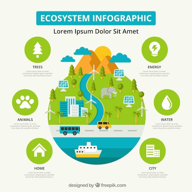 Infographie De L'écosystème Vecteur gratuit