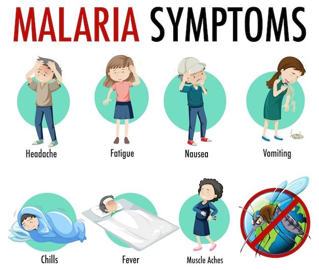 Infographie Des Informations Sur Les Symptômes Du Paludisme Vecteur gratuit