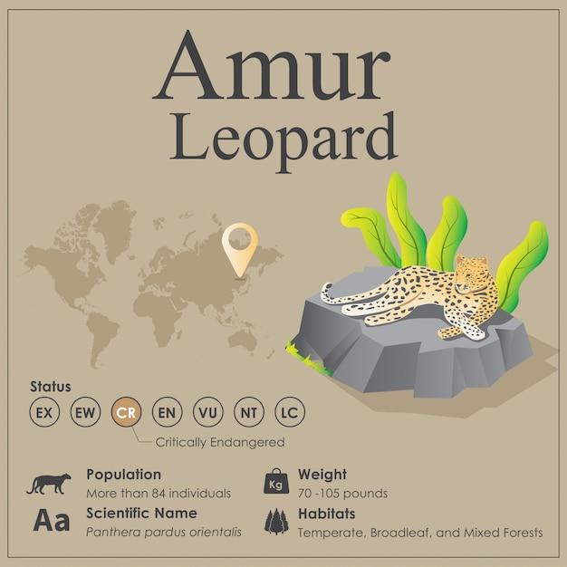 Infographie isométrique de l'amour léopard Vecteur Premium