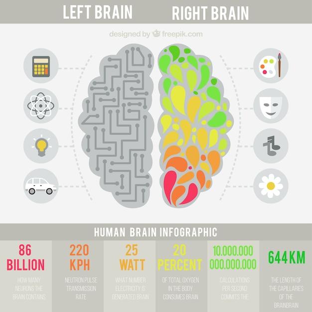 infographique du cerveau humain dans la conception plate t l charger des vecteurs gratuitement. Black Bedroom Furniture Sets. Home Design Ideas