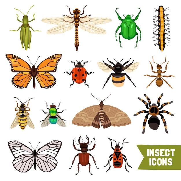 Insectes icons set Vecteur gratuit