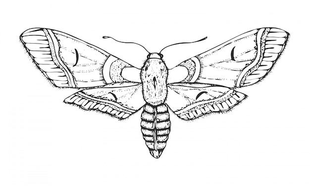 Insectes Papillons Ou Papillons Sauvages. Bombyx Mori Ou Papillon De Soie Domestique. Vecteur Premium