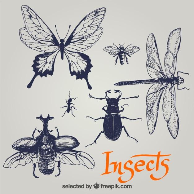 Insectes sketchy Vecteur gratuit