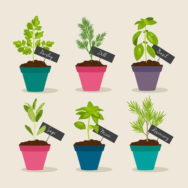 Jardin d'herbes avec des pots d'herbes Vecteur Premium