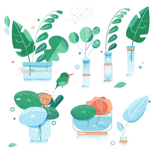 Jardin Urbain. Feuilles Vertes De Plantes Exotiques. Fleur Dans Des Bouteilles En Verre. Style Plat Vecteur Premium
