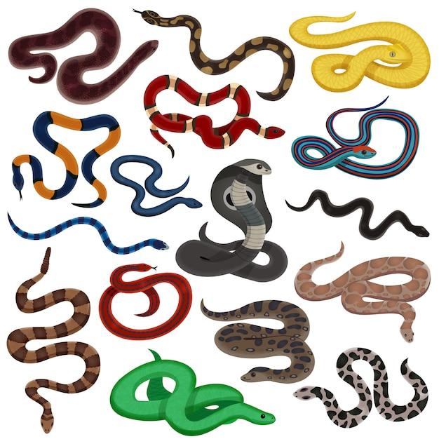 Jeu De Dessin Animé De Serpents Venimeux Vecteur gratuit