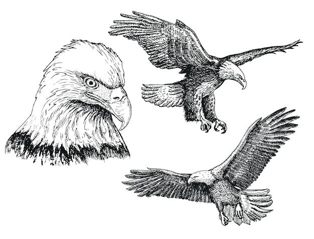 Jeu D'icônes De Croquis Oiseau Aigle Vecteur Premium
