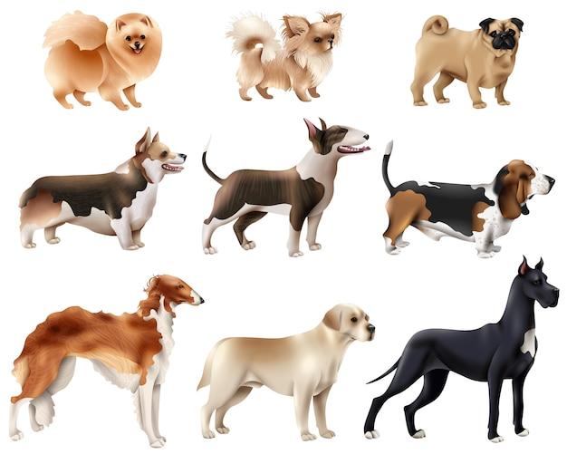 Jeu d'icônes de races de chien Vecteur gratuit
