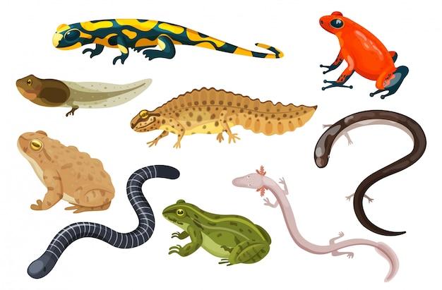 Jeu D Illustration D Amphibiens Dessin Anime Exotique Tropical Assis Crapaud Et Grenouille Tetard Salamandre Icones De Triton Isole Sur Blanc Vecteur Premium