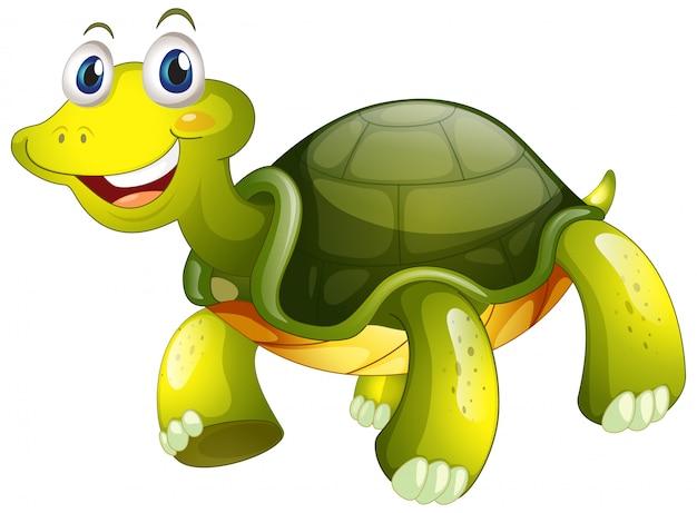 Jolie tortue sur blanc Vecteur gratuit