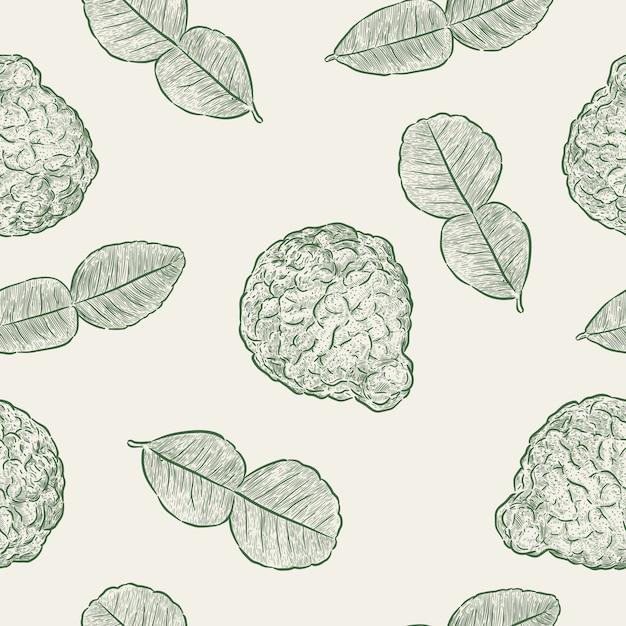 Kaffir lime, modèle sans couture. main dessiner un vecteur d'esquisse. Vecteur Premium