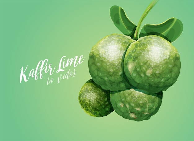 Kaffir limes clipart vectoriel Vecteur Premium