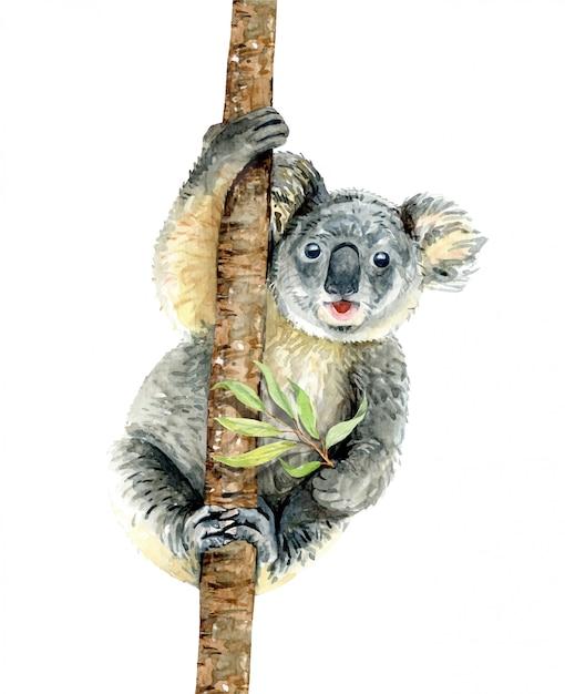 Koala accrocher sur une branche avec cale d'eucalyptus Vecteur Premium