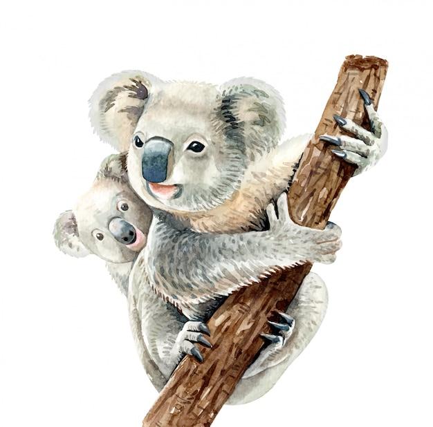 Koala Aquarelle Et Bébé Accrochent Sur Une Branche. Vecteur Premium
