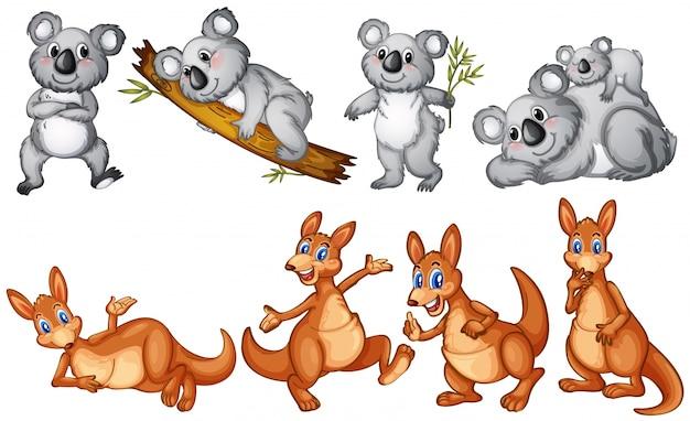 Koalas et kangourous sur blanc Vecteur gratuit
