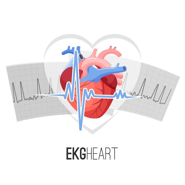 Lectures ecg sur le papier et emblème promotionnel du cœur humain. Vecteur Premium