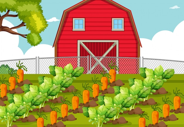 Légume dans une ferme Vecteur gratuit