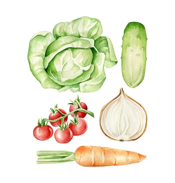 Légumes Aquarelles Chou, Concombre, Oignon, Tomates, Carottes Vecteur Premium