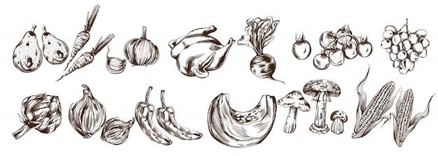 Légumes d'automne mis en ligne collection. artichauts, citrouilles, maïs, tomates, récoltes fraîches Vecteur Premium