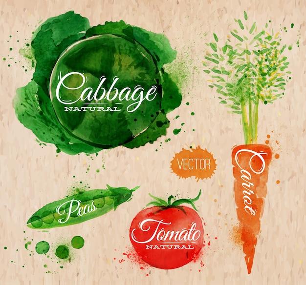 Légumes chou aquarelle Vecteur Premium