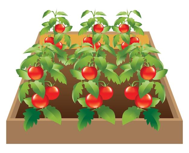 Légumes_jardin_tomato Vecteur Premium