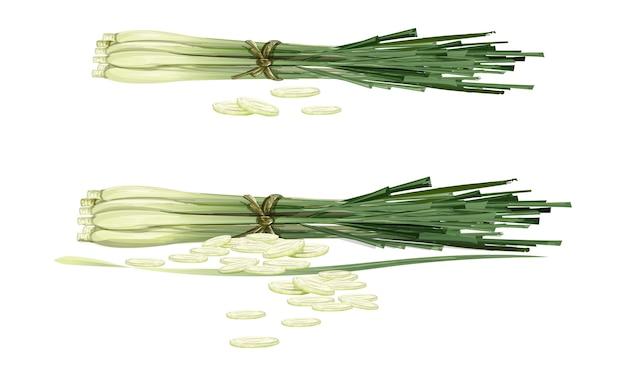 Lemon grass02 Vecteur Premium