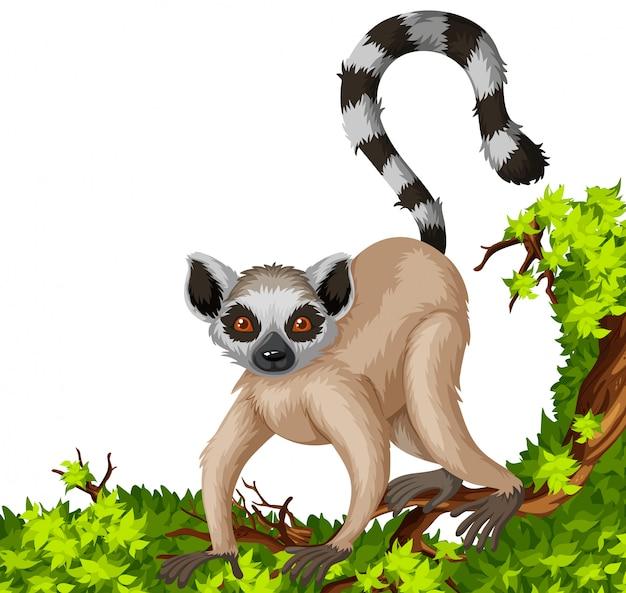 Lémurien sur la branche Vecteur gratuit