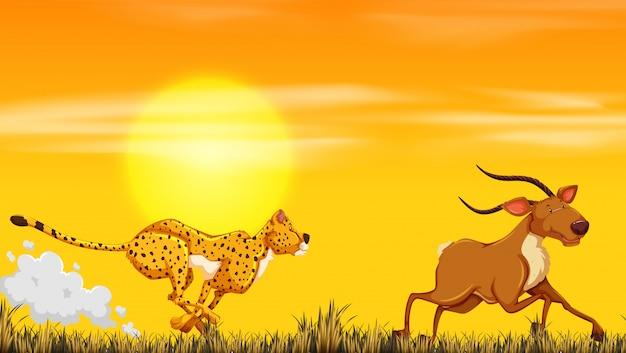 Un léopard à la recherche de nourriture Vecteur gratuit