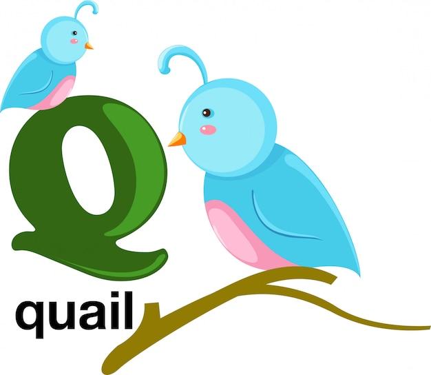 Lettre de l'alphabet animal - q Vecteur Premium