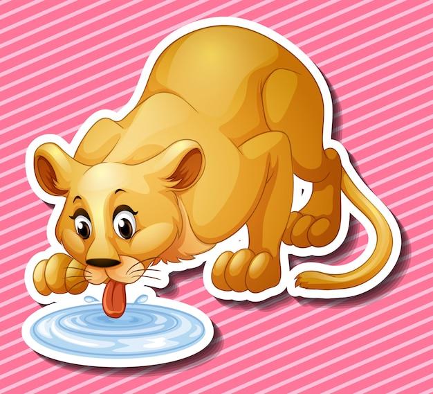 Lion mignon l'eau potable de la flaque d'eau Vecteur gratuit