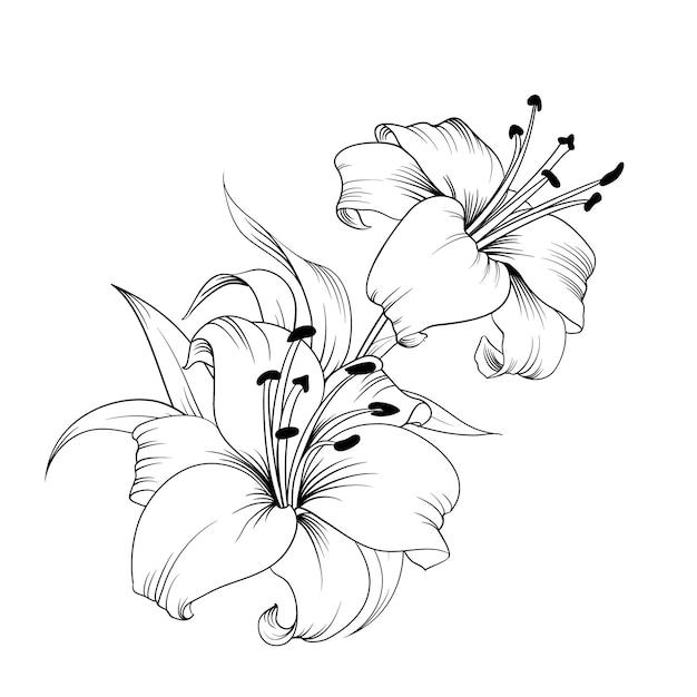 Le Lis Fleuri. Vecteur Premium