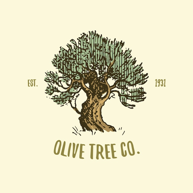 Logo De L'olivier Gravé Ou Dessiné à La Main, Ancien Emblème Pour L'écologie, Le Camping Ou La Marque Alimentaire Vecteur Premium
