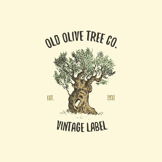 Logo De L'olivier Gravé Ou Dessiné à La Main, Vieil Emblème Pour L'écologie, Le Camping Ou La Marque Alimentaire Vecteur Premium