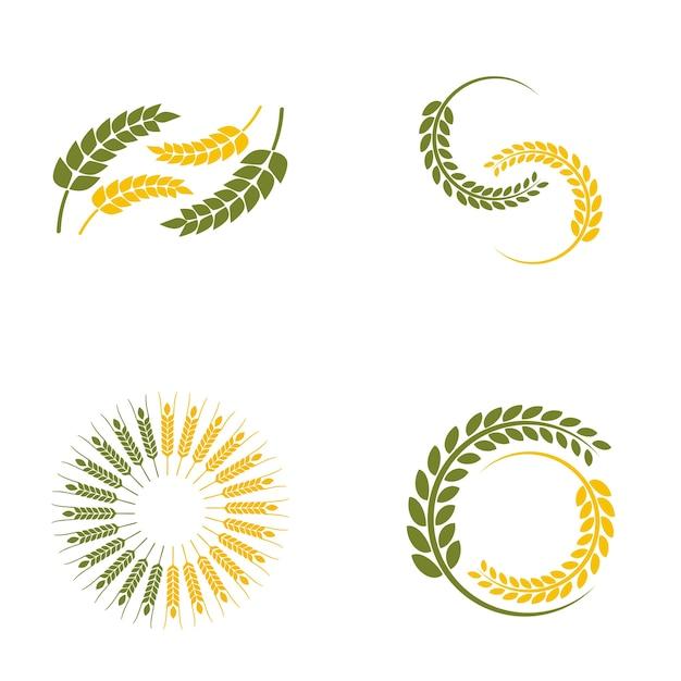 Logo paddy de blé Vecteur Premium