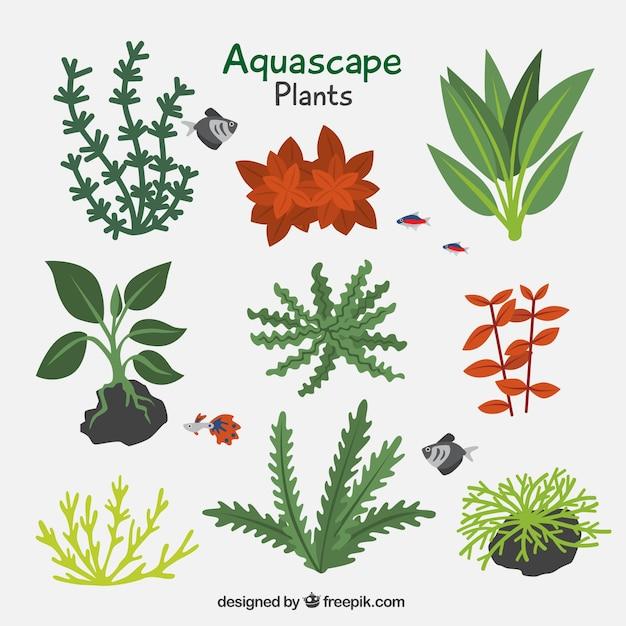 Lot De Plantes Aquatiques Vecteur gratuit