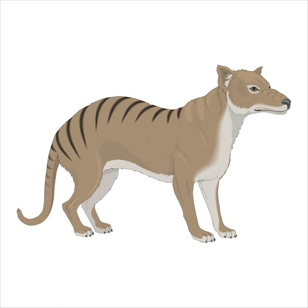 Loup marsupial sauvage Vecteur Premium