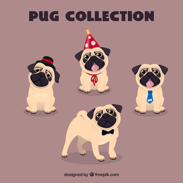 Lovely pugs avec des éléments drôles Vecteur gratuit