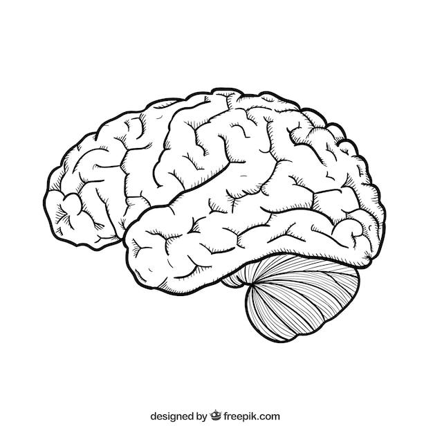 Main cerveau dessinée Vecteur gratuit
