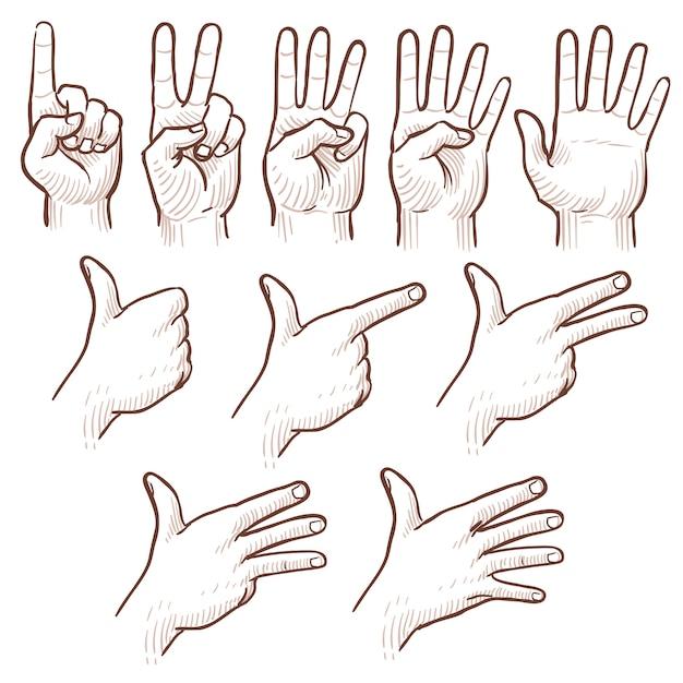 Main, dessin, esquisse, mains d'homme, montrant les numéros, série, doodle Vecteur Premium