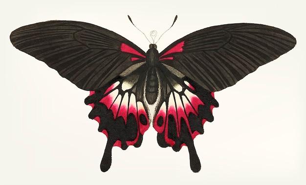 Main dessinée de papillon brun caudé Vecteur gratuit