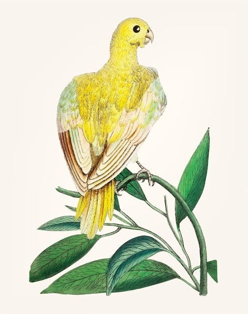 Main dessinée de perruche jaune Vecteur gratuit