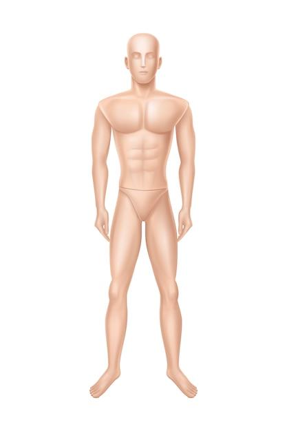 Mannequin masculin, mannequin pour magasin de vêtements. Vecteur gratuit