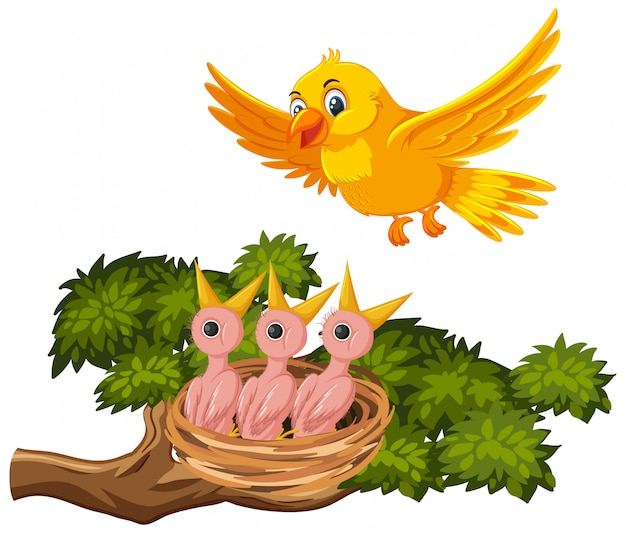 Mère Oiseau Nourrir Les Poussins Vecteur Premium